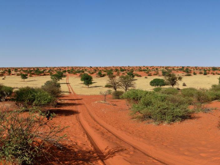 Namibia Kalahari 2015