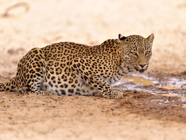 Südafrika, Kalahari 2016