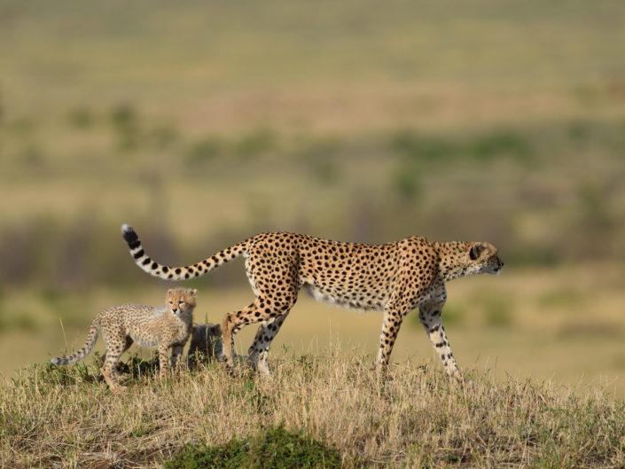 Masai Mara Malaika 2016