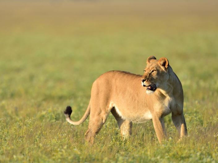 Botswana Kalahari 2016