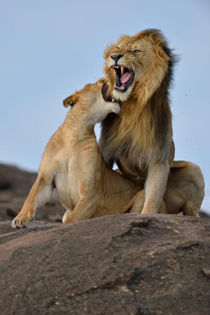Löwenzähne