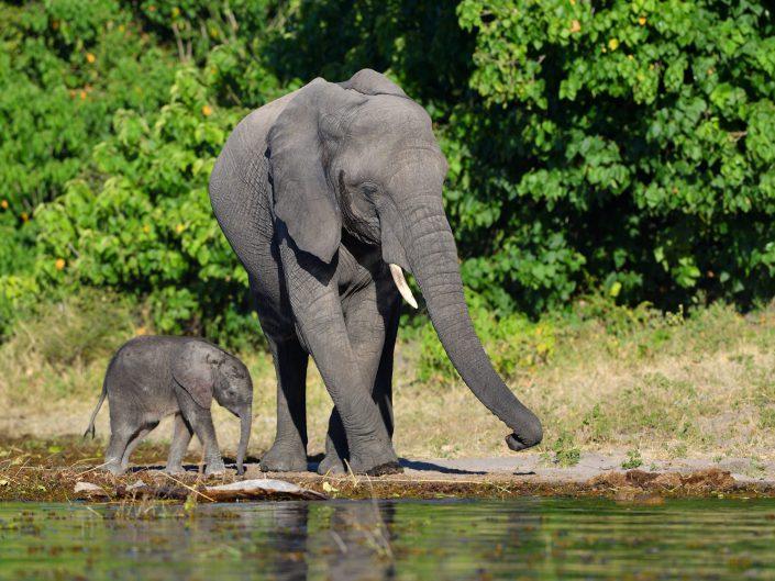 Botswana Chobe 2017