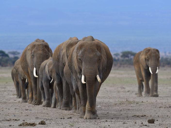 Kenia Amboseli 2017