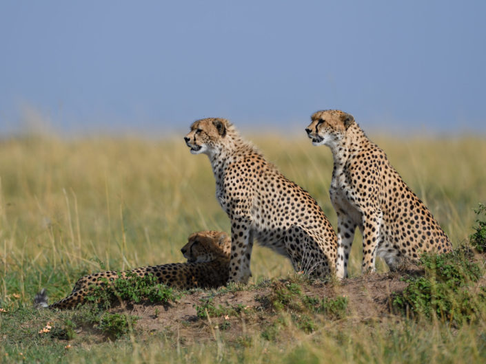 Masai Mara Malaika 2017