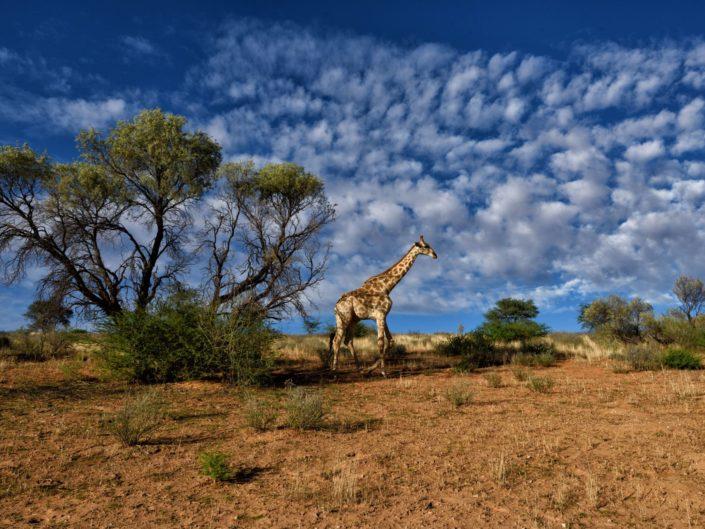 Südafrika Kalahari 2017