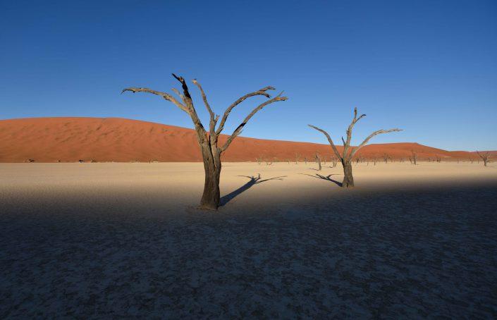 Kameldornbäume im Death Vlei werfen lange Schatten