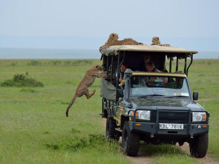 Masai Mara Malaika 2015