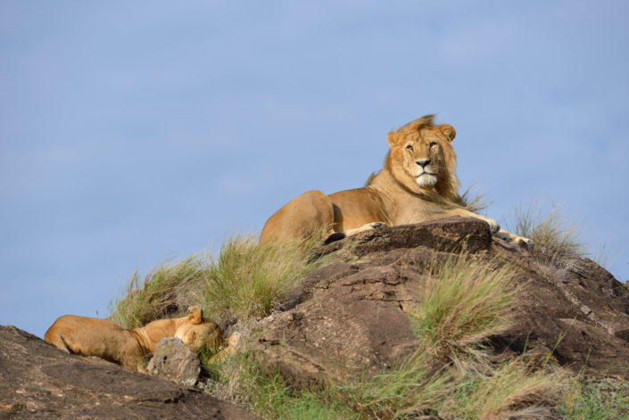 Löwe auf dem Thron