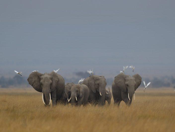 Kenia Amboseli 2018