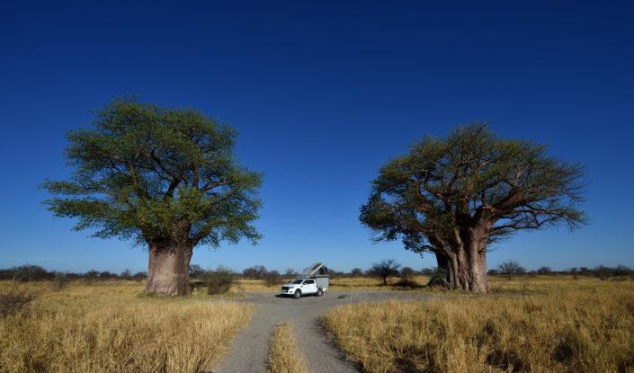 Baines Baobab Campsite BO2