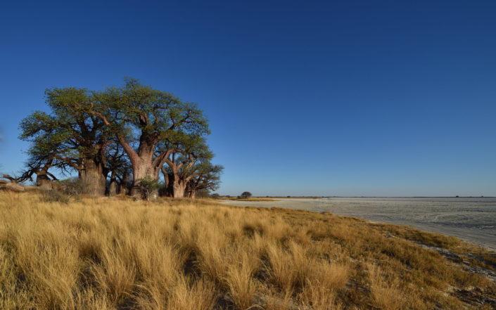 Baines Baobabs mit Sicht auf die Salzpfannen