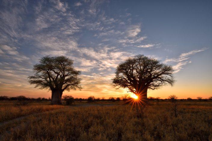 Sonnenaufgang bei der Campsite BO2 bei den Baines Baobabs