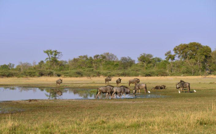 Moremi Okavango Okavango Botswana 3rd Bridge