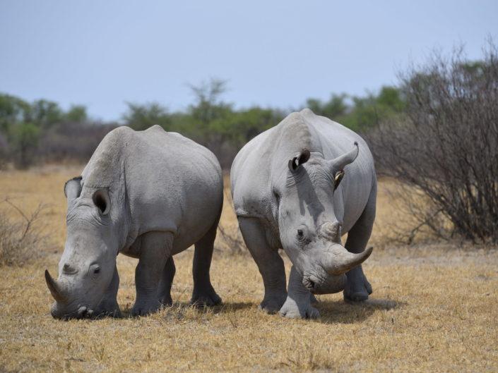 Botswana Kalahari 2018