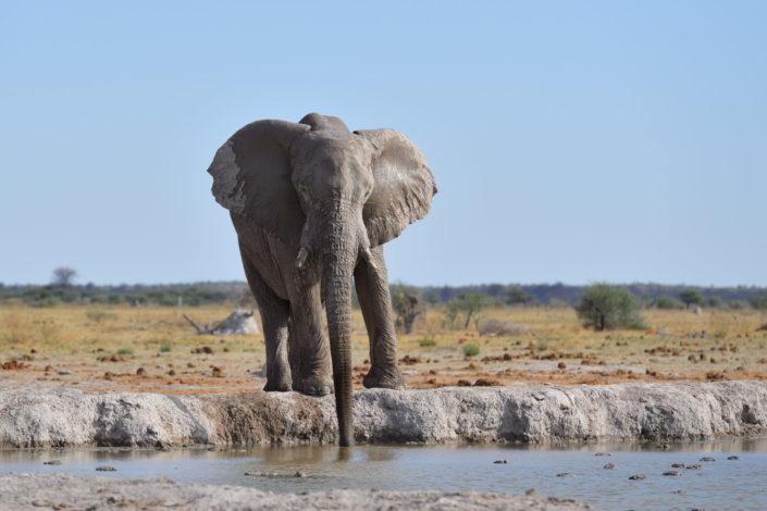 Nxai Pan Wasserloch mit Elefant
