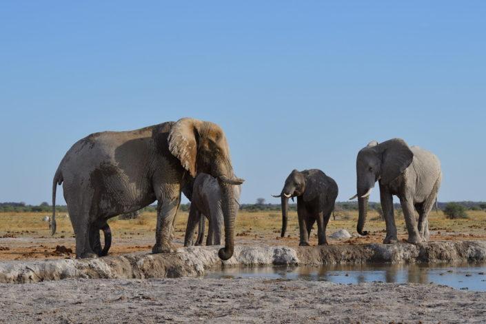 Elefanten am Nxai Pan Wasserloch