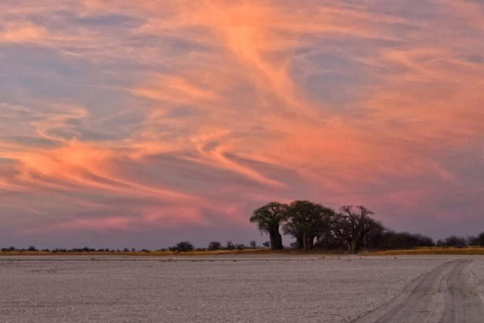 Baines Baobab bei Sonnenuntergang