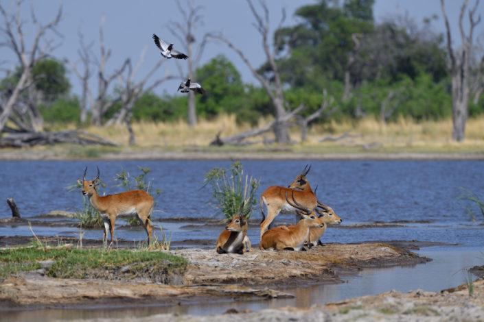 Moremi Okavango Botswana Dead Tree Island