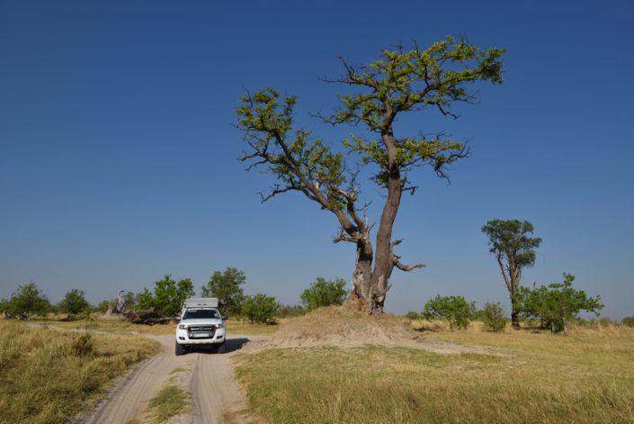 Moremi Okavango Botswana 3rd Bridge AVIS Ford Ranger