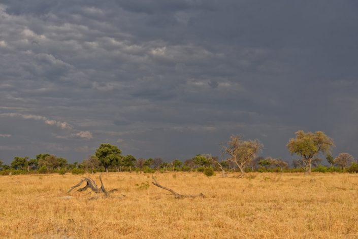 Moremi Okavango Botswana Khwai