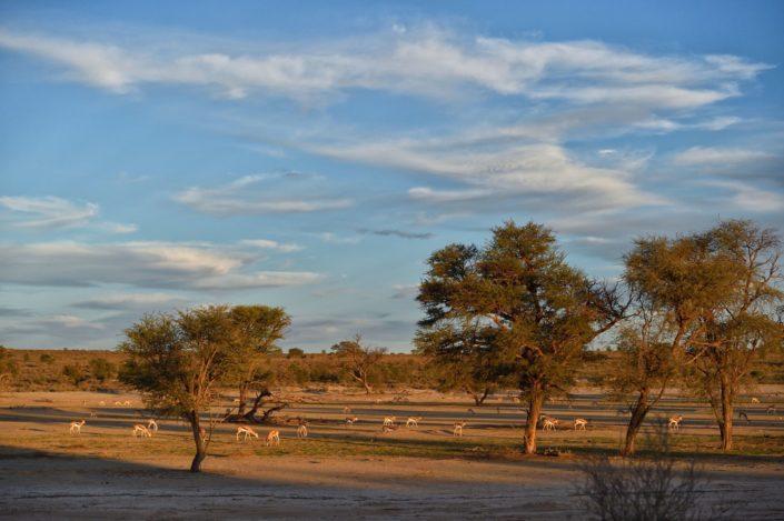 Abendstimmung im KTP Kgalagadi Transfrontier Park