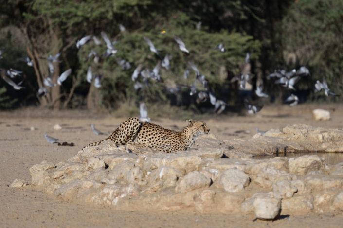 KTP Kgalagadi Transfrontier Park