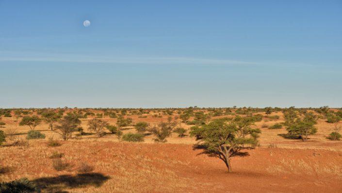 Mond über der Kalahari
