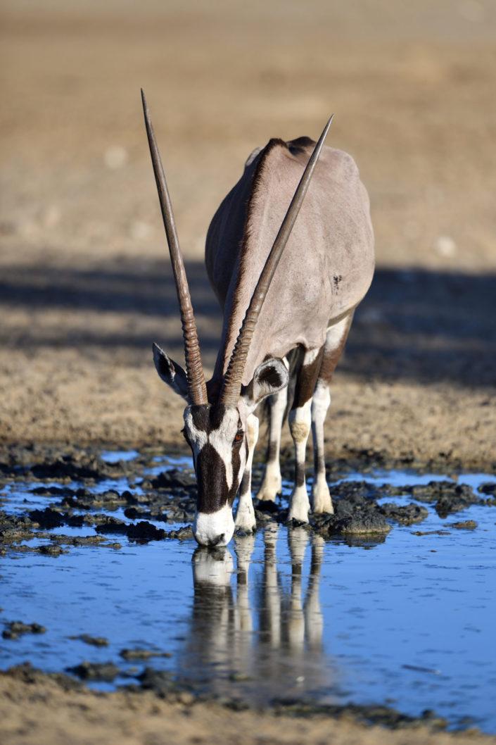 Oryx am Marie se Gat Wasserloch