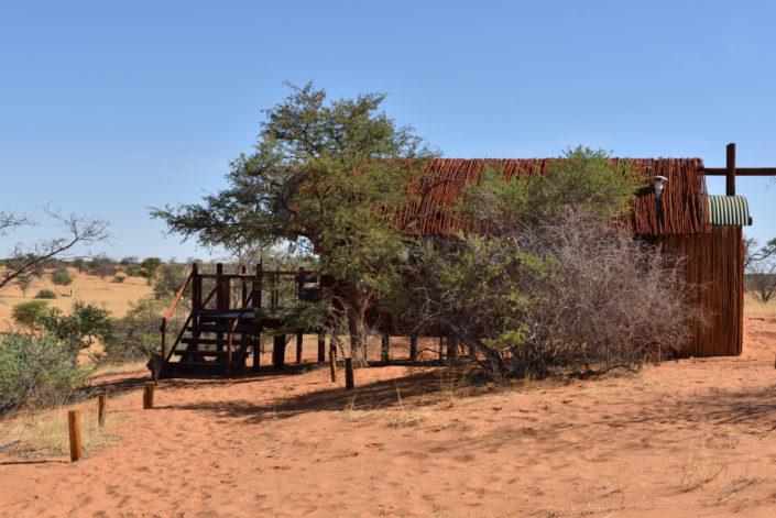 Löwen im Gharagab Wilderness Camp