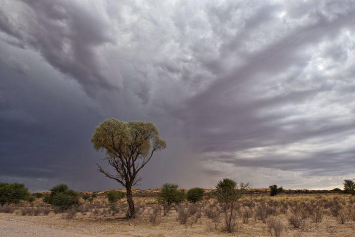 Dunkle schwere Wolken über dem Auob Tal