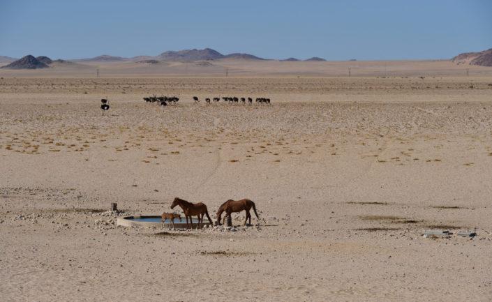 Wasserquelle für die Wildpferde in Garub