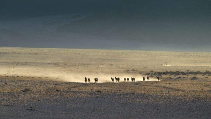 Galoppierende Wildpferde wirbeln goldenen Sand auf in Namibia