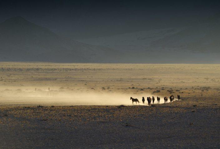 Wildpferde Namibia