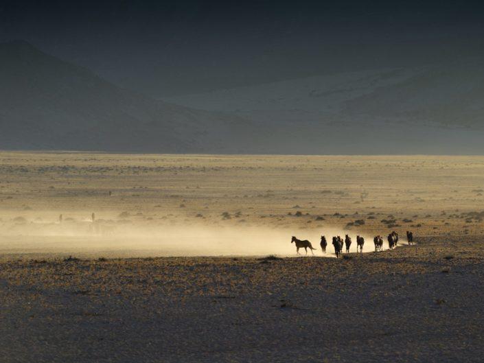 Wildpferde Namibia 2019