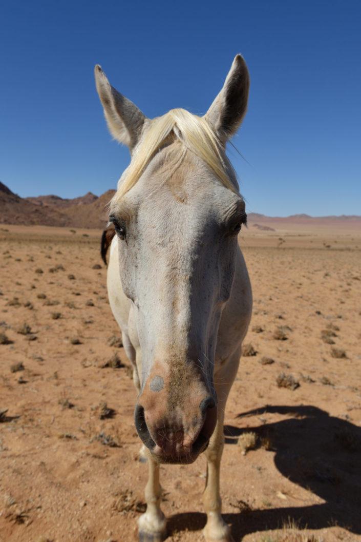 Pferd bei Klein Aus Vista, Namibia