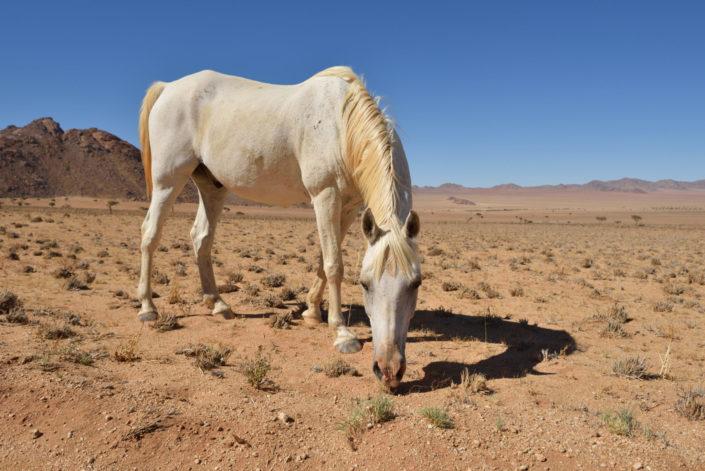Pferde bei Klein Aus Vista