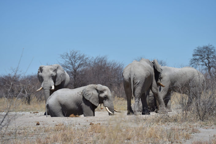 Elefanten South Camp Wasserloch