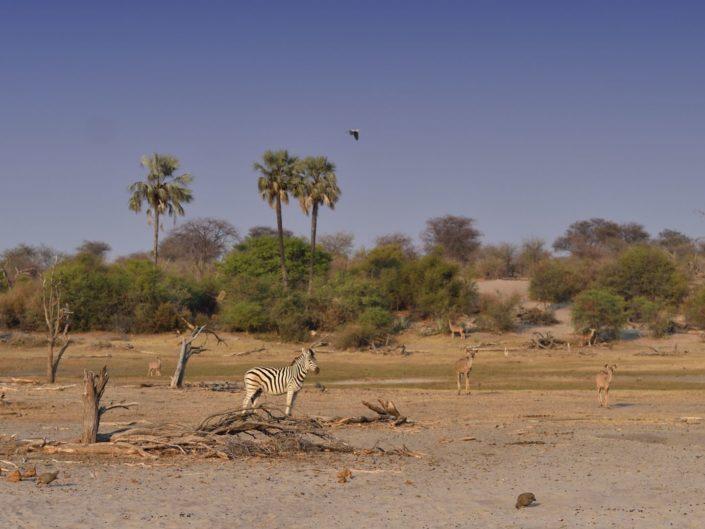 Boteti River Botswana 2019