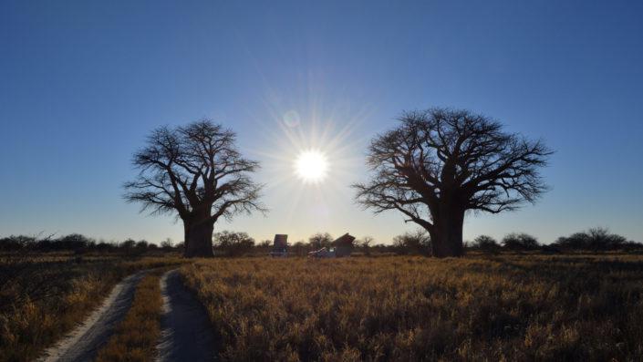 Sonnenstrahlen zwischen zwei Baobabs