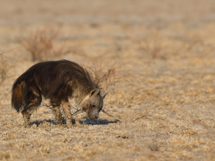 Central Kalahari Botswana 2019