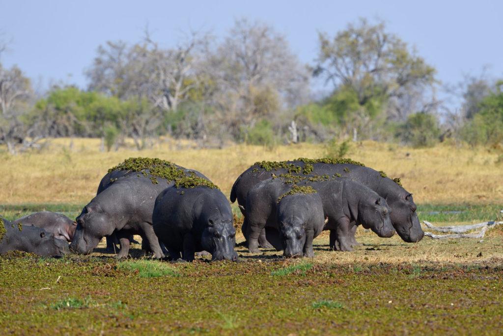Hippo-Pool in der Nähe der Magotho Campsite