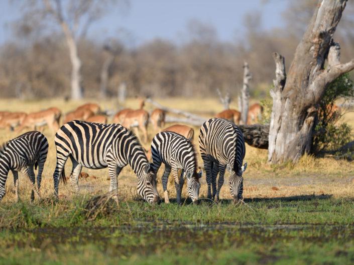 Magotho Camp Botswana 2019