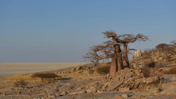 Baobabs und Granitfelsen