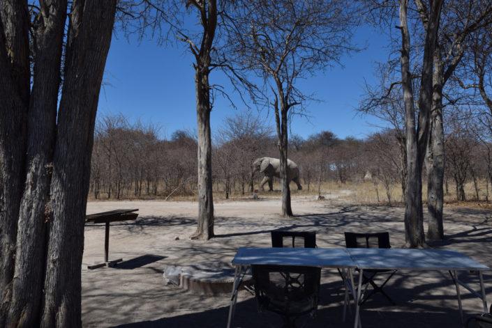 Elefant im Camp