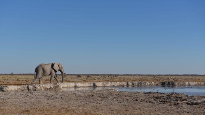 Ein Elefant erreicht das Nxai Pan Wasserloch