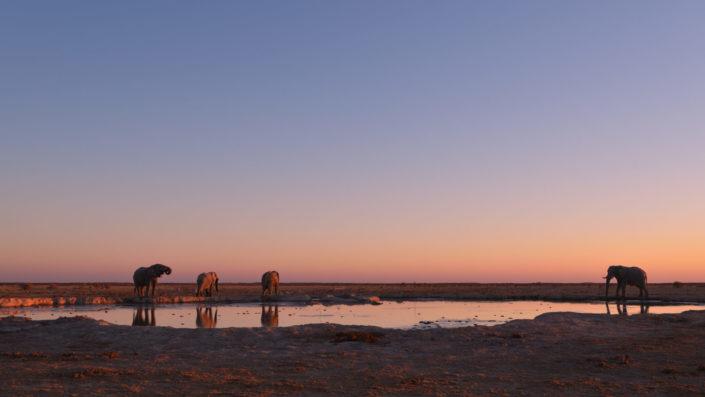 Vier Elefanten im Abendrot am Nxa Pan Wasserloch