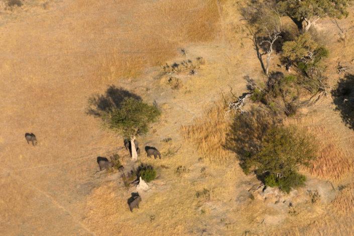 Elefanten aus dem Flugzeug fotografiert