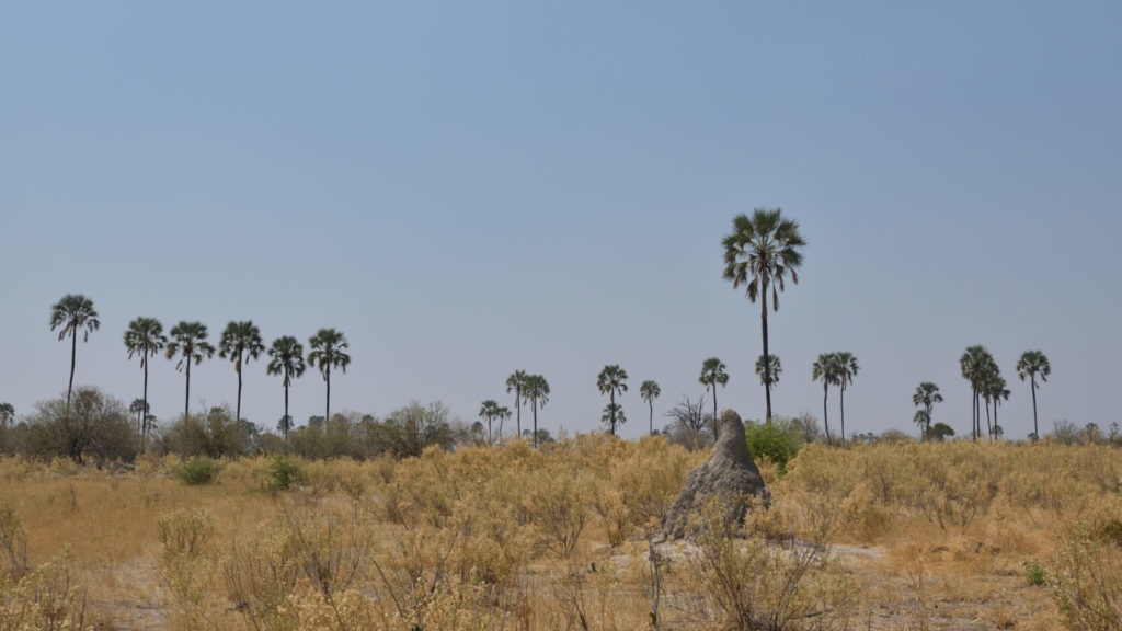 Palmen säumen den Horizont im Moremi Game Reserve