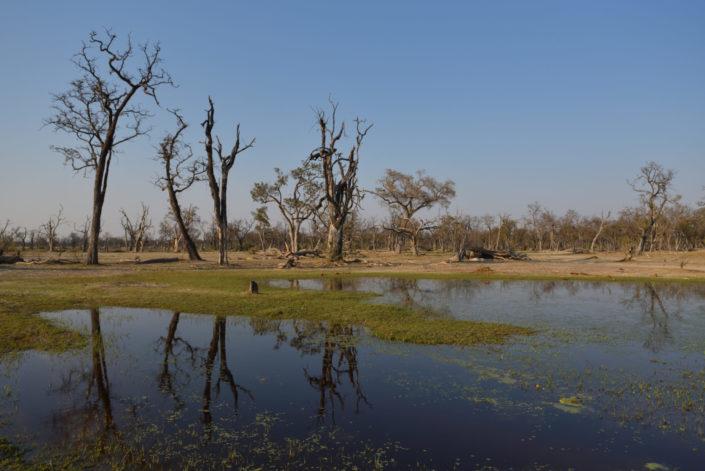 Paradise Pools, Xakanaxa, Moremi Game Reserve