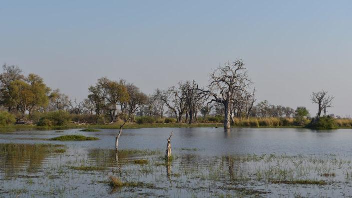 Hippo Pool mit totem Baum